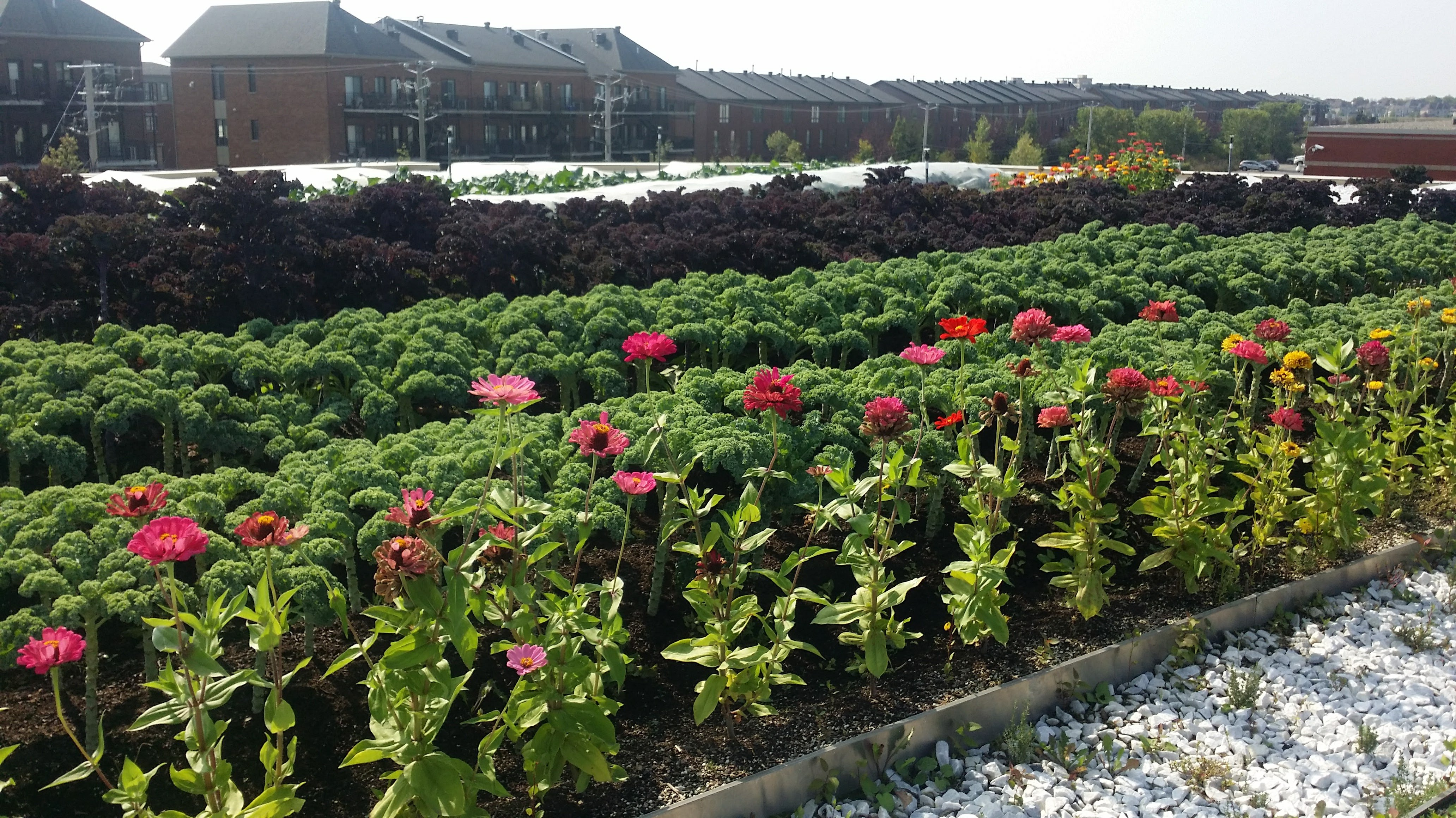 A Garden Is Growing Atop IGA Duchemin
